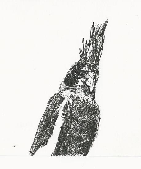 4 x 6 postcard sketch by rjh